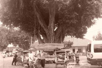 Ficus II